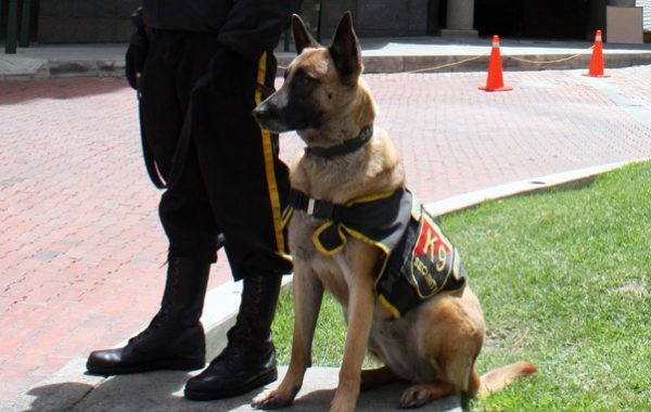 K9 Patrol Unit